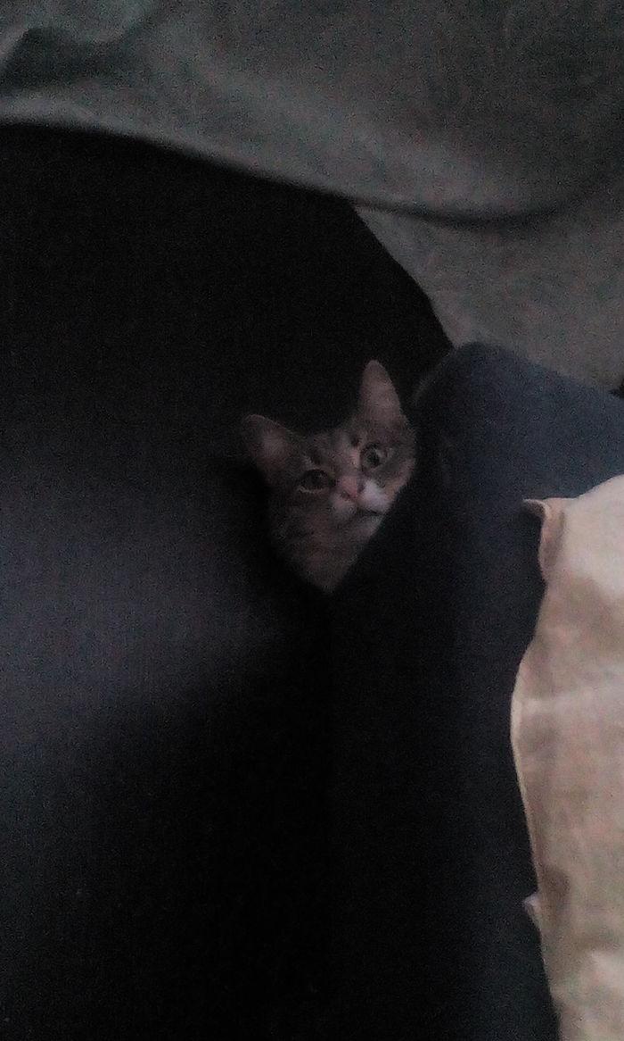 Моя любимая шпионка. Животные, Шпион, Милота, Длиннопост, Кошатники, Кот