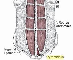 Доказательства эволюции в теле человека человек наук, наука, биология, эволюция, человек, анатомия, рудименты, интересное, длиннопост
