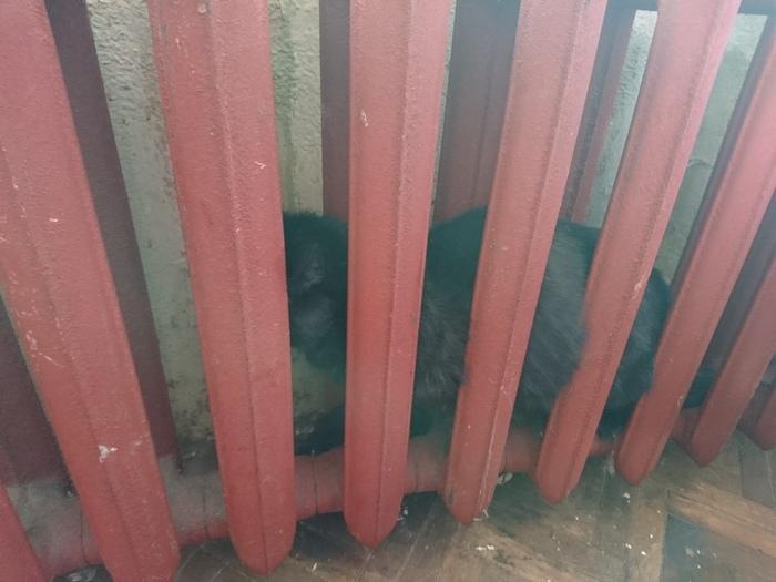 Тяжелый случай с котиком кот, спасение животных, Кошкиспас, длиннопост, трудный случай