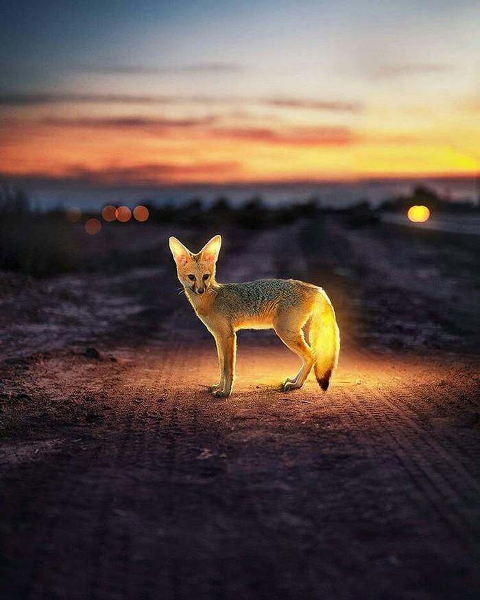 """""""Светлячки"""" Фотография, Животные, Свет, Длиннопост"""