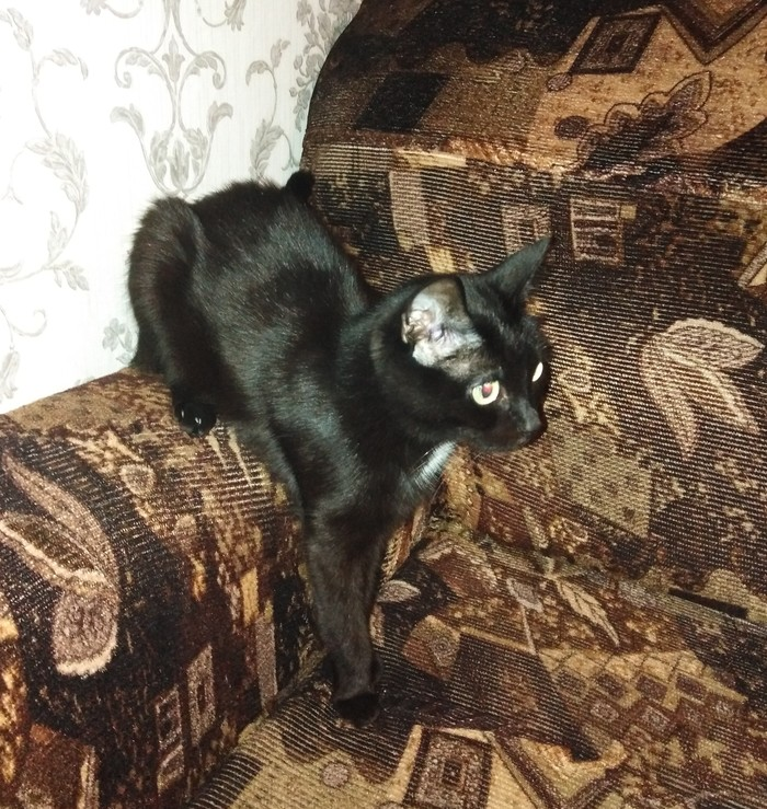 Так удобно Мне так удобно, Длиннопост, Черный кот, Кот, Диван