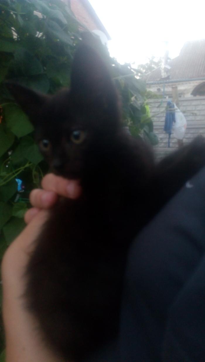 Возьмите котейку Днепропетровск Отдам кошек, Днепропетровск, Кот, Длиннопост, Без рейтинга, В добрые руки, Котята