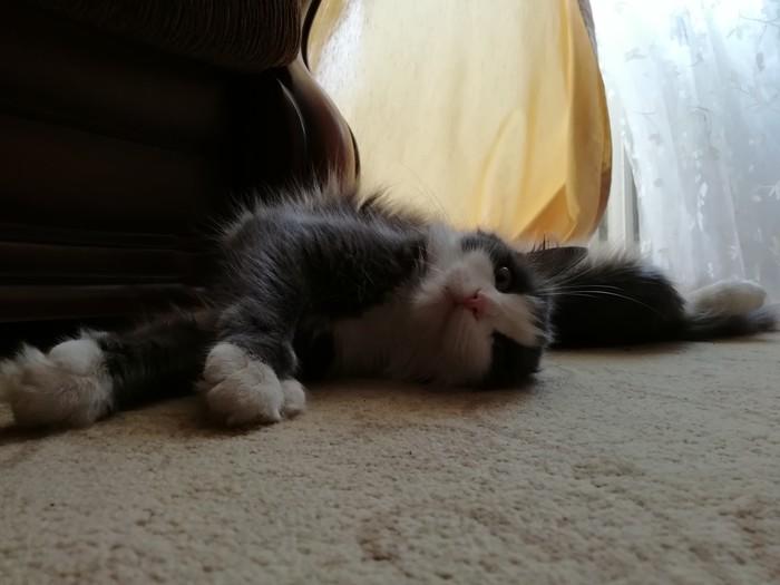 Я на работу, а она Пышка, Гладильный котейка, Кот