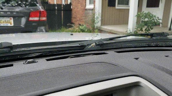 """""""Птица нагадила в единственное место на стекле моего авто, которое не могут очистить дворники"""""""