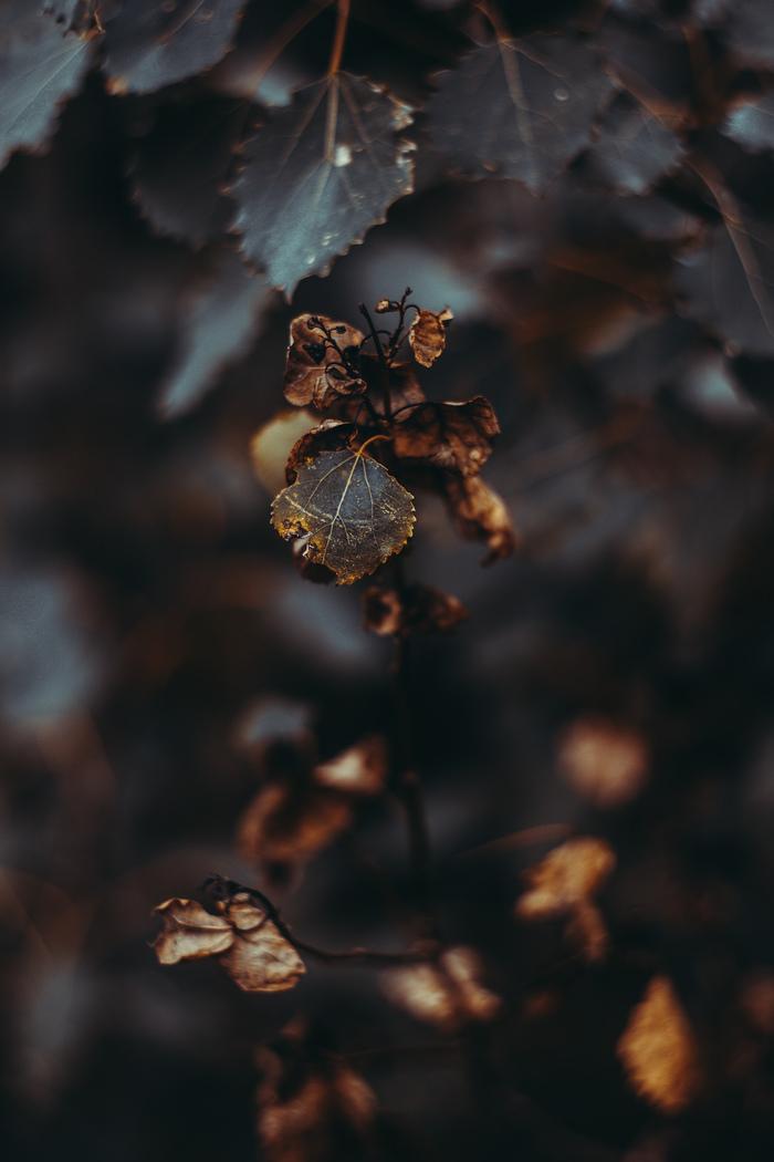 Атмосферы пост: осень Природа, Фотография, Флора, Canon, ВКонтакте, Искусство, Гелиос, Длиннопост