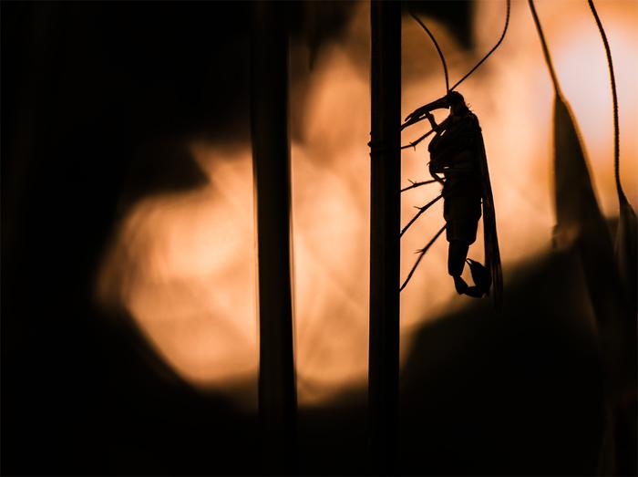 На огороде с фотоаппаратом. Часть 5 Насекомые, Природа, Макро, Макросъемка, Паук, Паутина, Муха, Скорпионница, Длиннопост