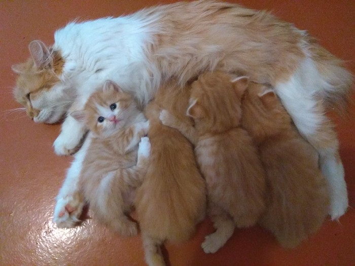 Котятам ровно месяц
