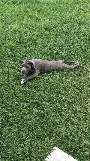 Она ничем не болеет, просто ей очень нравится так ползать по травке в саду