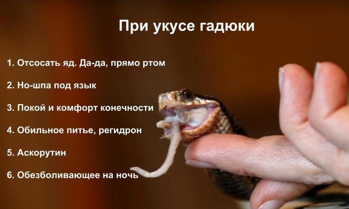 Так отсасывать или нет? Что НА САМОМ ДЕЛЕ делать при укусе змеи Всё как у зверей, Укус, Змея, Гадюки, Ядовитая змея, Тимонова, Первая помощь, Безопасность, Видео
