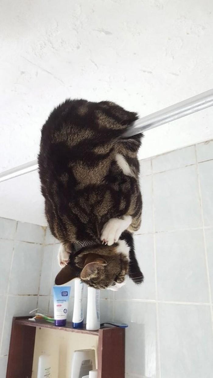 Кошки очаровательные и удивительные. Кот, Животные, Люди и кошки, Длиннопост