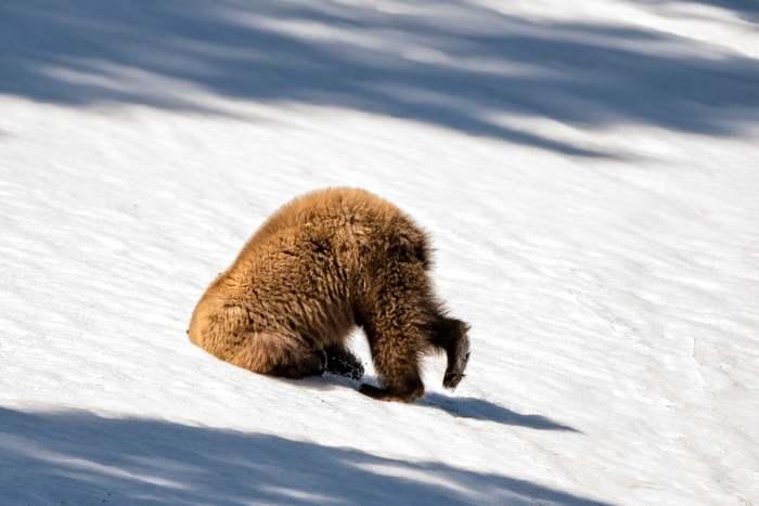 ФиналистыComedy Wildlife Photography Awards 2018 Фотография, Животные, Дикая природа, Конкурс, Comedy Wildlife Photography Aw, Длиннопост