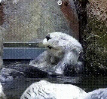 Два способа купания