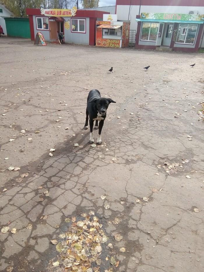 Собака-сотона Собака, Зло