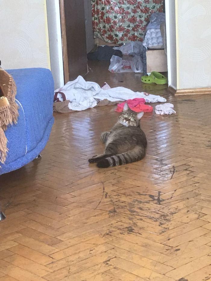 Феня. Фенита глотнула фенола и стала феноменом.Хочу рассказать о кошке Кот, Моё, Папка, Фыр, Пушистый, Длиннопост