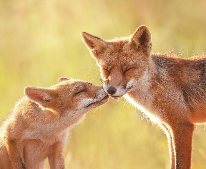 Дай поцелую...