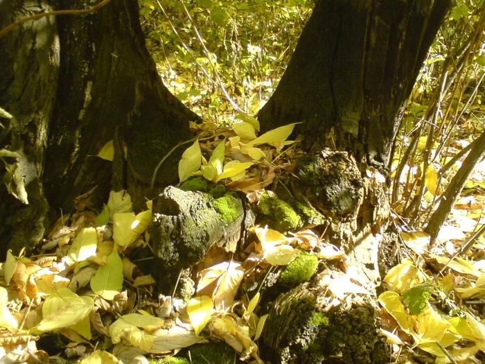 Осень. Последние краски. Фотография, Длиннопост, Осень, Цветы