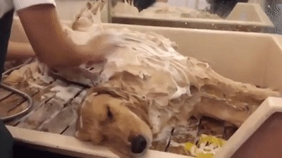 SPA для пса