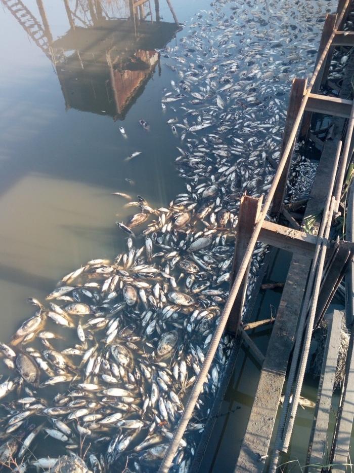ЧП на Кимовском рыбхозе. Рыба, ЧП, Тула, Длиннопост, Негатив