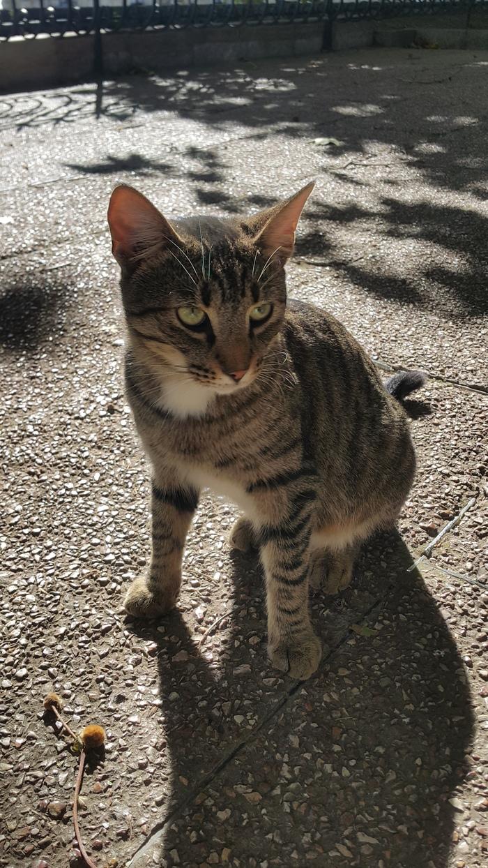Крымских котов вам в ленту Кот, Крым, Фотография, Длиннопост