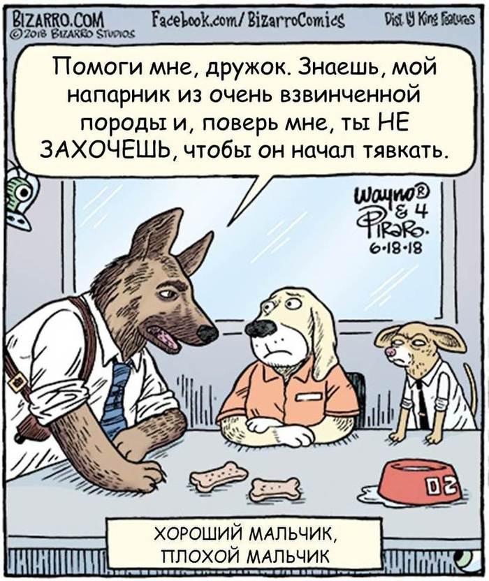 https://cs8.pikabu.ru/post_img/2018/10/24/9/154039157812379959.jpg