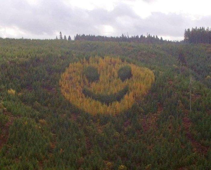 Деревья посаженные в виде смайлика Дерево, Смайл, Лес, Reddit, Фотошоп мастер