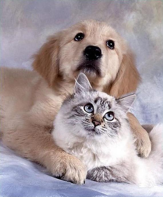 Дружба Кот, Собака, Дружба
