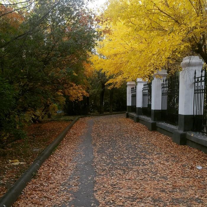Город моей судьбы Волжский, Осень, Фотография