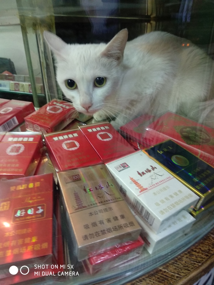 Пушистый продавец табачных изделий Кот, Продавец, Китай, Сигареты