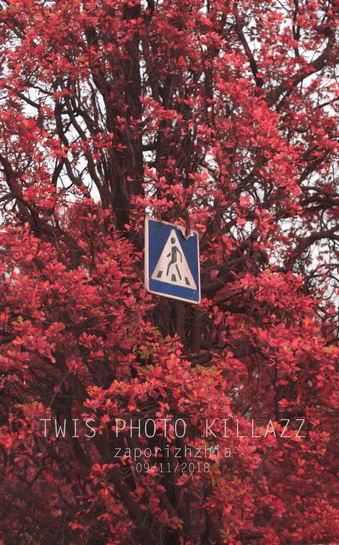 Рэд Фотография, Осень