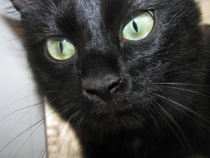 Лига химиков, нужна нестандартная помощь. Или как отучить кошку ссать в неположенном месте. Без рейтинга, Кот, Моча, Помощь
