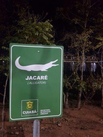 Парк, рядом с которым я живу. Змеи, аллигаторы, обезьяны... Бразилия, Парк, Природа, Змея, Крокодил, Видео, Гифка, Длиннопост