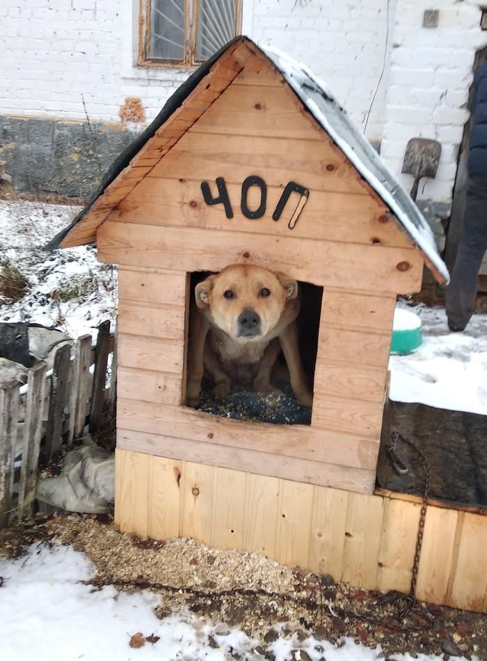 ЧОП по Русски ЧОП, Сторож, Собака, Животные