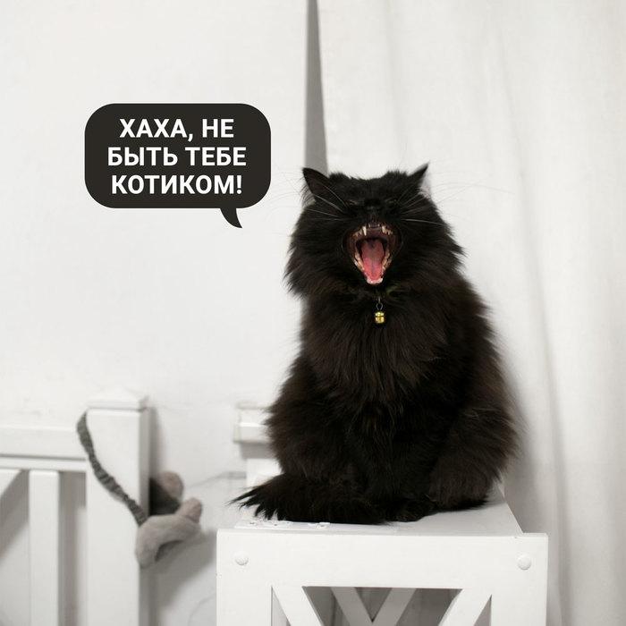 Кошка Бабайка Кот, Котомафия, Бабай, Длиннопост