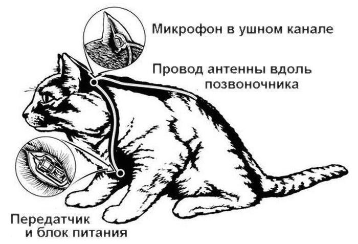 Проект Acoustic Kitty Картинки, Цру, Холодная война, Кот