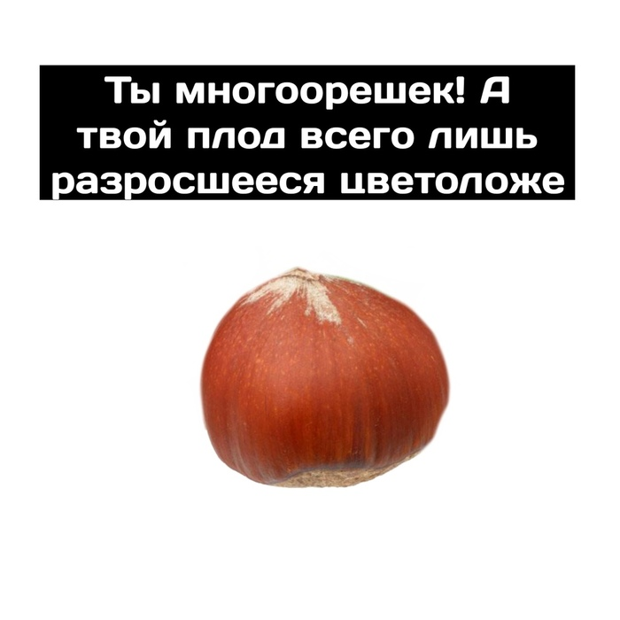Разносторонняя клубника Клубника, Орехи, Ягода, Биология, Длиннопост