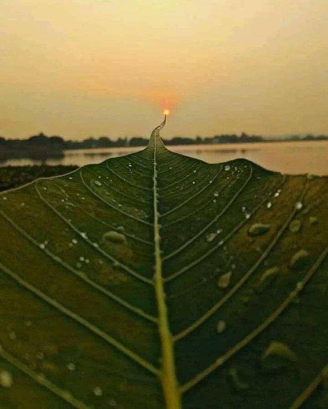 Путь к солнцу Фотография, Лист, Солнце