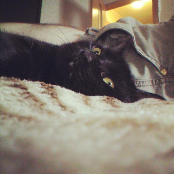 Макс, the cat Мой сосед Кот, Кот, Котомафия, Фотография, История одного кота, Максим, Безумный Макс, Длиннопост