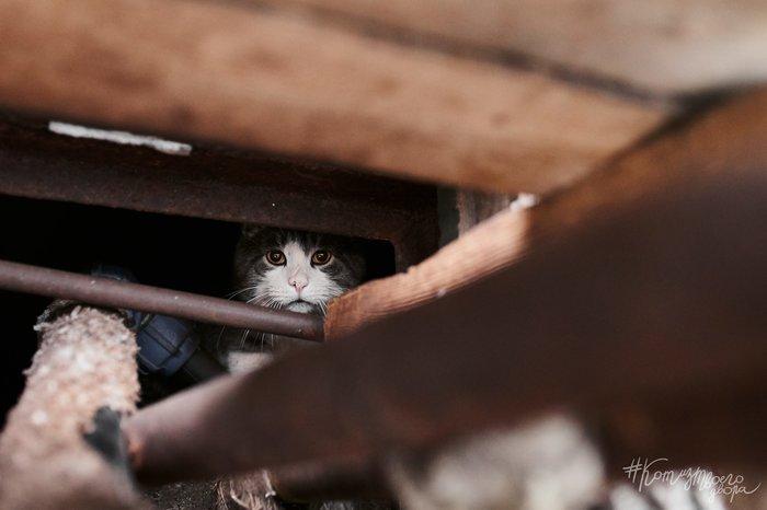 Жизнь в подвале Кот, Животные, Город, Мурманск, Фотография, Фотограф, Подвал, Братья наши меньшие