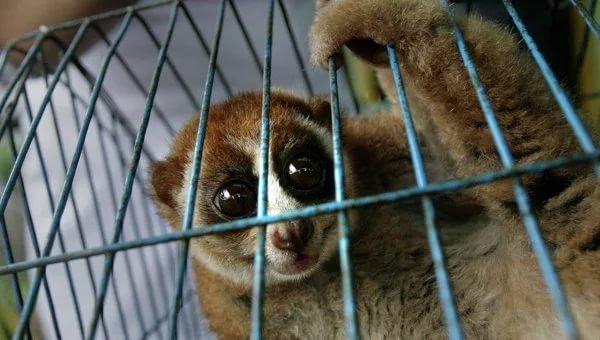 Конфискованых животных убивают Животные, Защита животных, Министр