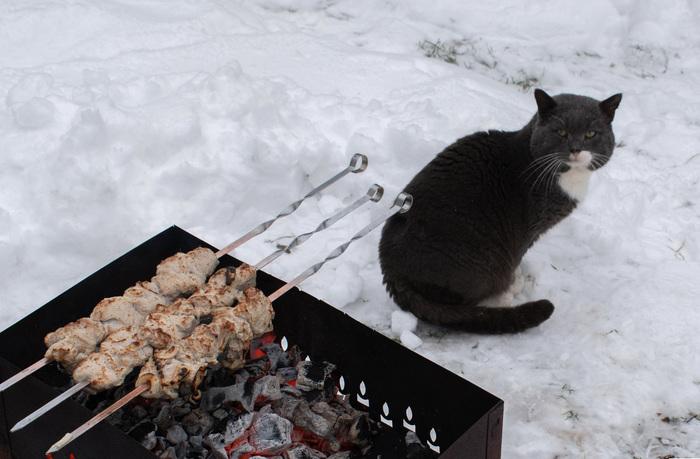 Соседский кот в гостях.