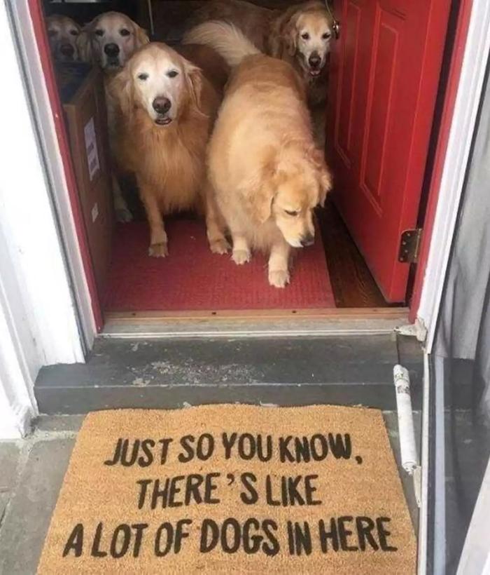 Респект владельцам, предупреждающих посетителей с собакофобией, хотя как можно таких пугаться? ) Собака, Коврик, Предупреждение, Милота, Золотистый ретривер