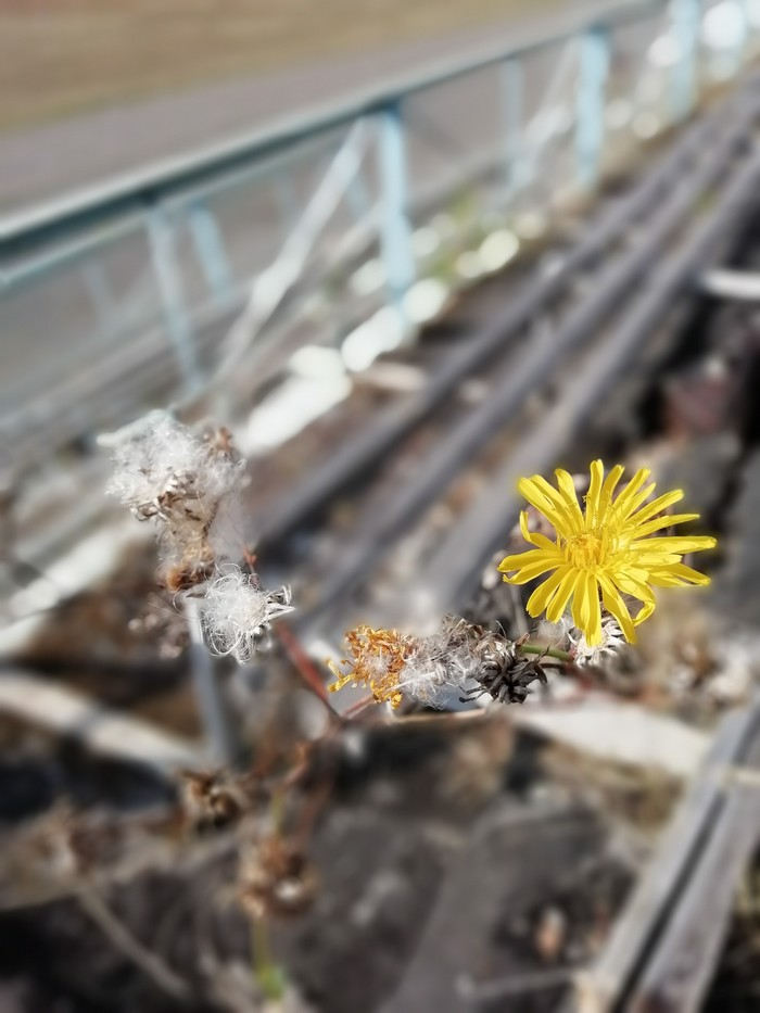 Воспоминания о лете Цветы, Фотография