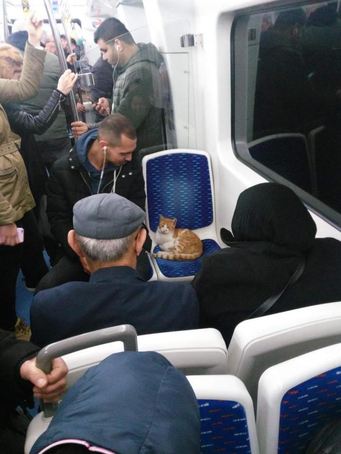 ВИП - пассажир