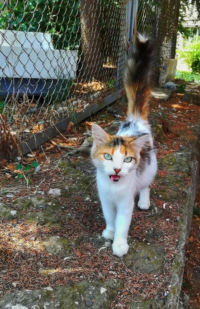 Ну, привет Кот, Трехцветная кошка, Крым, Привет, Мяу, Фотография