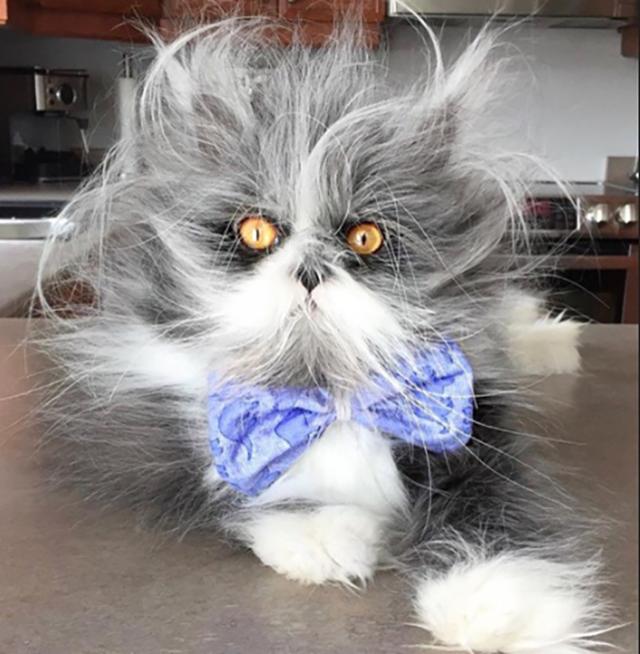 """Знакомьтесь: единственный в мире кот с """" синдромом оборотня"""" Кот, Животные, Болезнь, Длиннопост, История"""