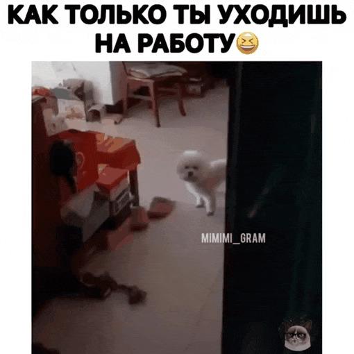 Твоя собака, когда ты уходишь