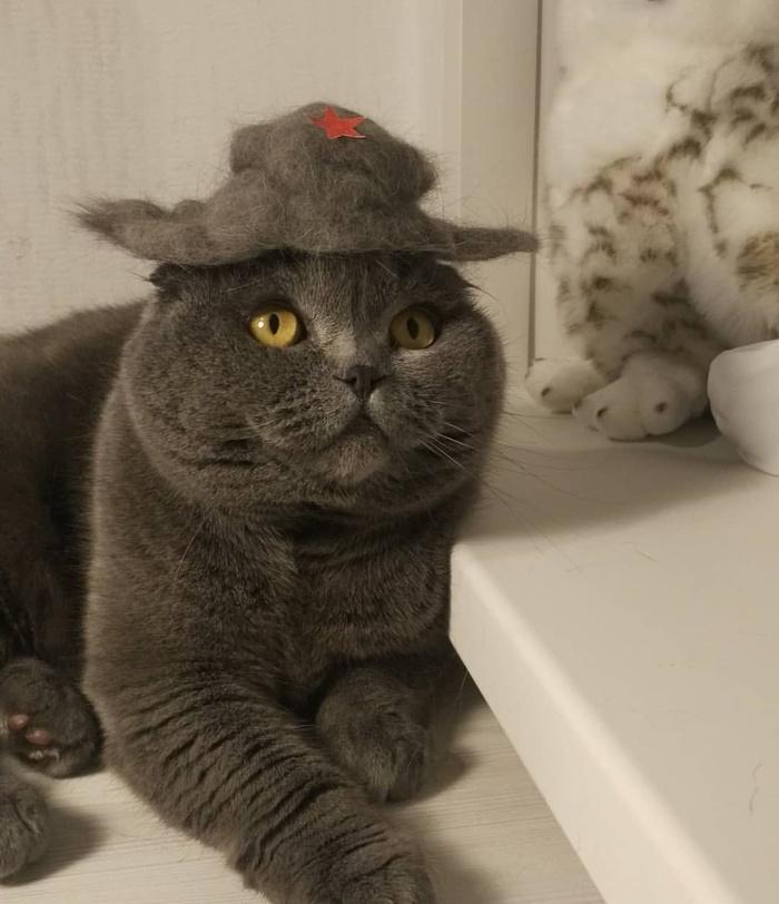 Продолжаем валять из кота ) Кот, Шляпа, Шерсть, Шотландская вислоухая, Сухое валяние