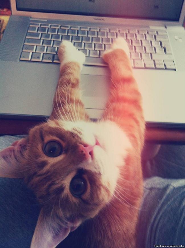 Бартер или как его там Помощь, Web-Программирование, Сайт, Кот