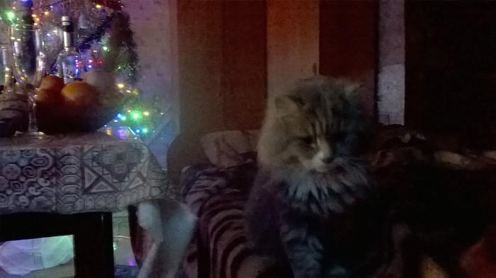 Мурзик прощается с уходящим годом Новый Год, Кот, Печаль