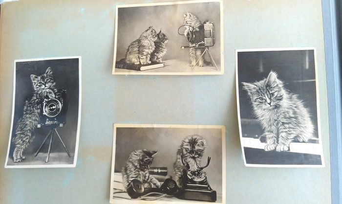 Котики на все времена Котята, Кот, Открытка, Длиннопост